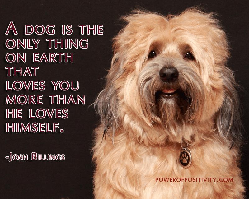 happy-dog-quote
