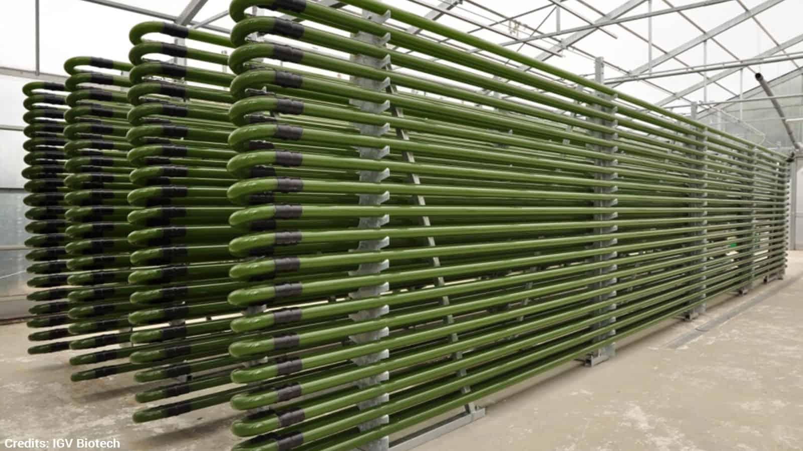 algae power plant