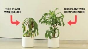 molestar a una planta