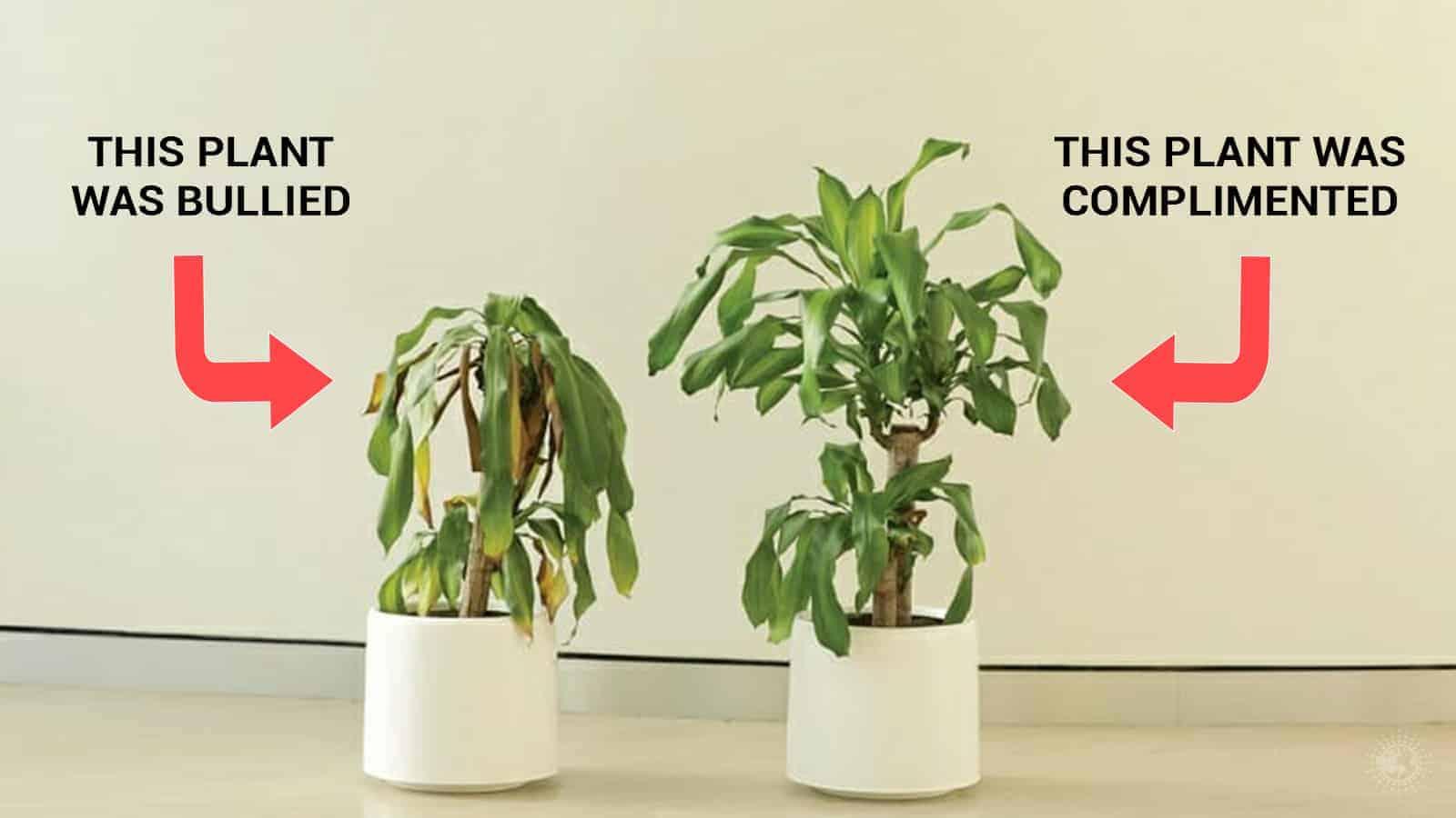 bully a plant